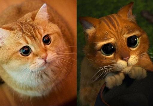 Рыжий кот фотографии