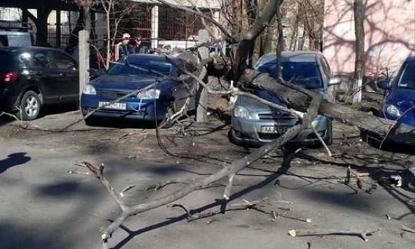 "Результат пошуку зображень за запитом ""дерево впало на автомобіль"""
