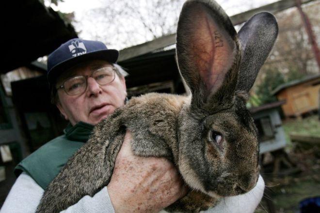 Ціна на гігантських кроликів може перевищувати сотню доларів - United  Airlines потрапила у новий скандал  9dfcf3f123ae5