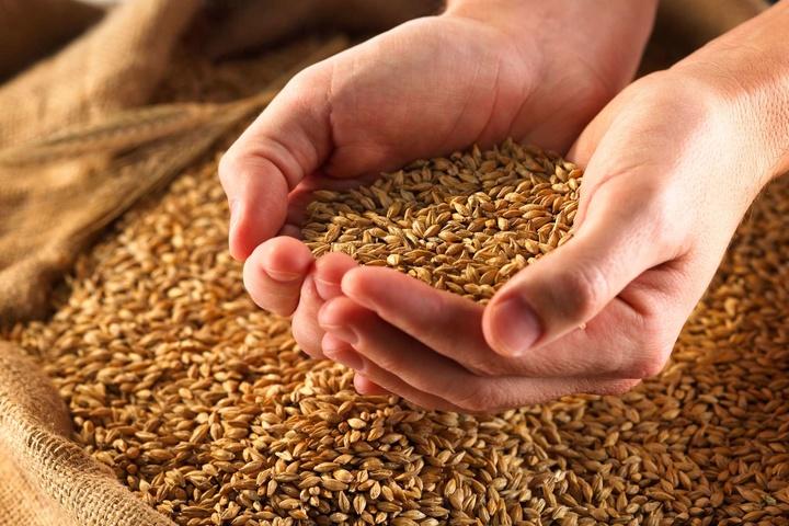 В Україні суттєво зросли запаси зернових