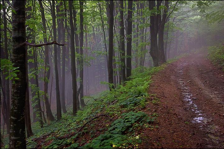 На захід України насуваються дощі з грозами