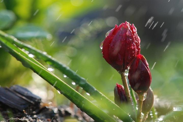 Погода вУкраїні нанеділю: очікуються дощі