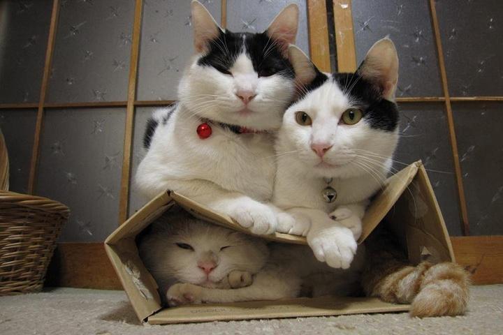 Ученые узнали, почему коты любят сидеть вкоробках