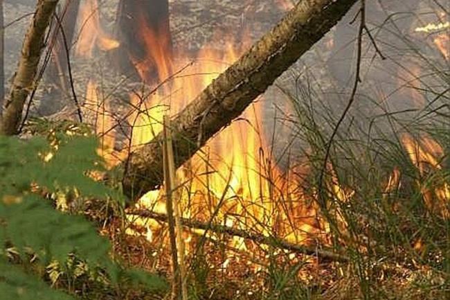 ДСНС попереджає про надзвичайну пожежонебезпеку навихідні