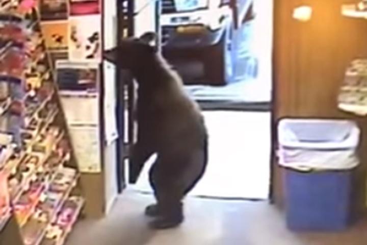 Ведмідь зайшов до магазину