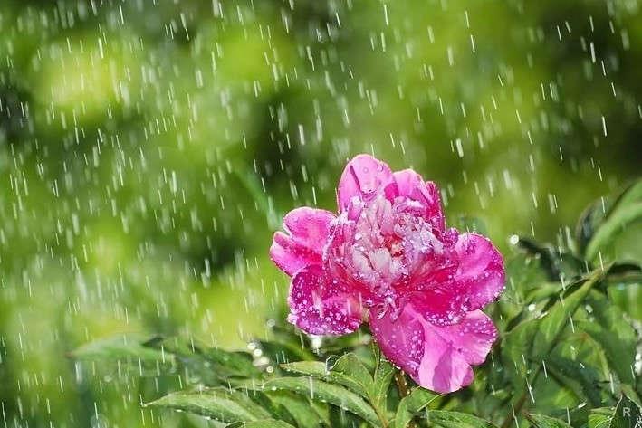 Дощі насході і температура до +26. Прогноз погоди на7 липня