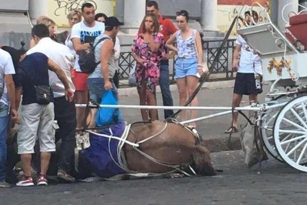ВОдесі через спеку знепритомнів кінь, який катав туристів