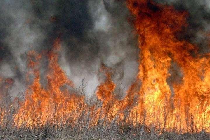 НаОдещині підпалили суху траву і вогонь знищив 8 дачних будинків