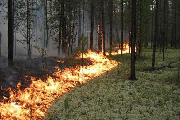 ВУкраїні зберігається загроза пожеж— ДСНС