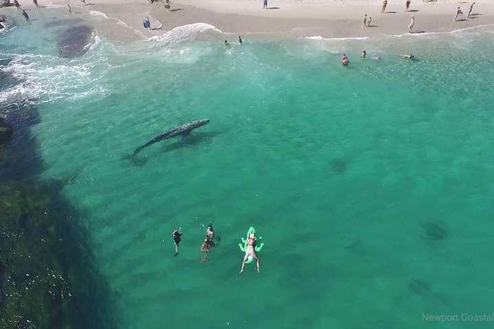 Кита на пляжі ніхто не помітив