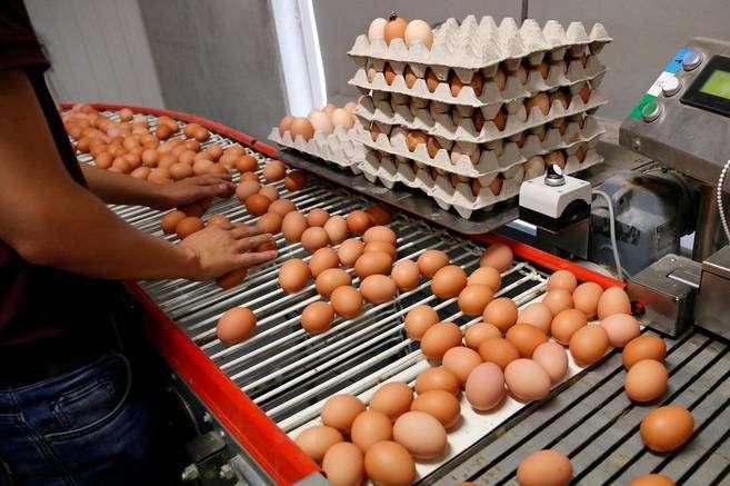 Держпродспоживслужба: ВУкраїні немає яєць, заражених фіпронілом