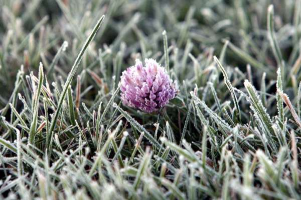 Вже до кінця тижня вчастині України очікуються заморозки