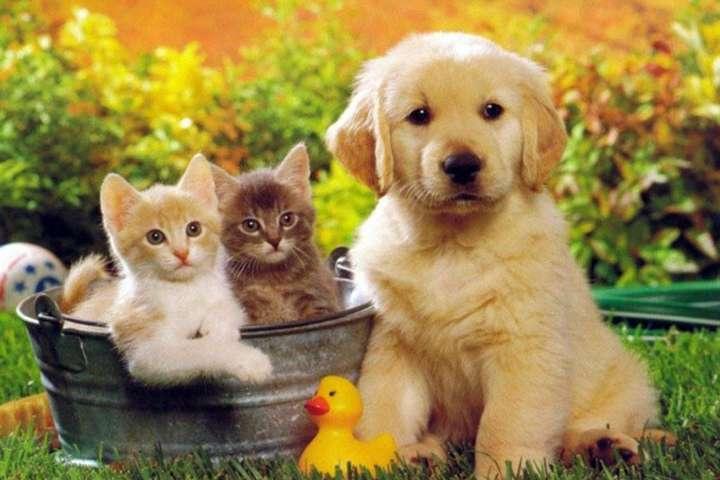 Почему животные не умеют плакать и смеяться?