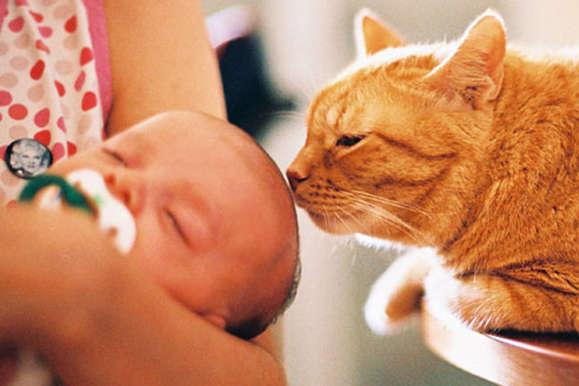 НаХарківщині кішка задушила тримісячне немовля