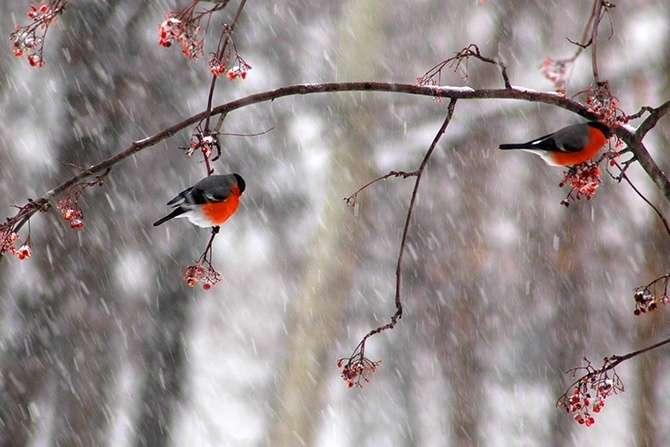 Погода на 6 грудня: очікується мокрий сніг з дощами