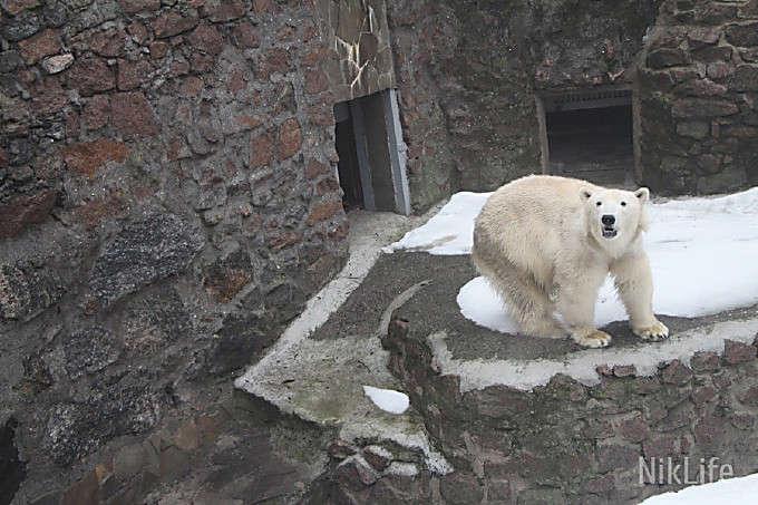 Взоопарке Николаева родился белый медвежонок