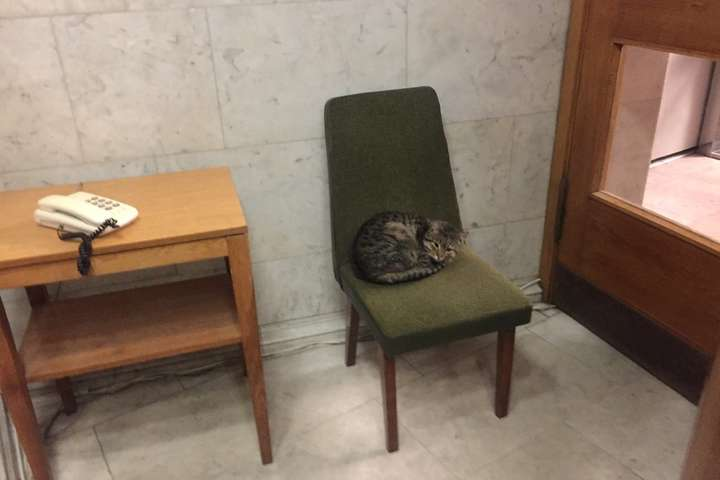 МИД приняло наработу полосатого кота Амбассадора