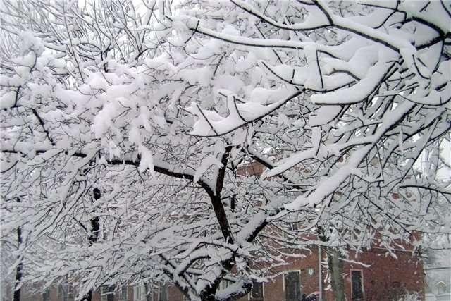 Тохолодно, то«тепло»: УКиєві слизько, мокрий сніг тамагнітні бурі