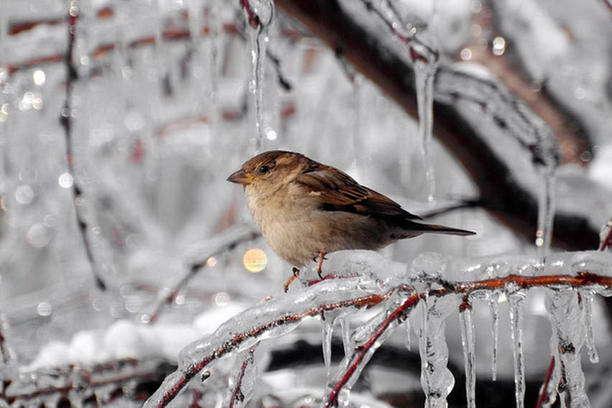 Погода на 23 січня: в Україні посиляться морози