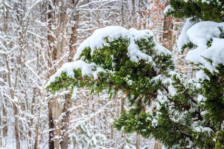 Погода на 25 січня: очікуються 20-градусні морози