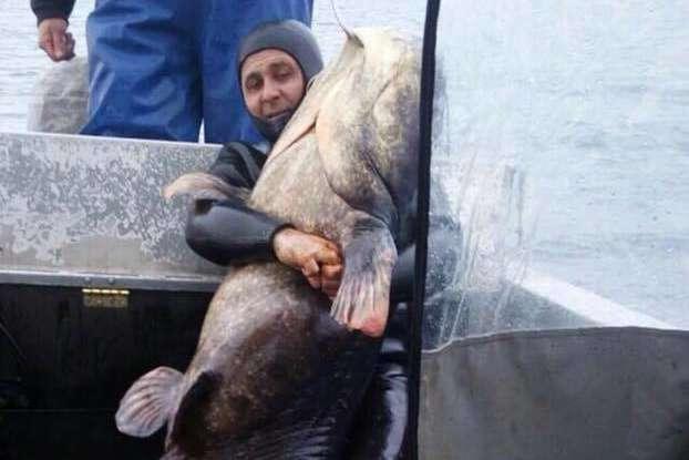 Рибалки спіймали сома вагою 140кг