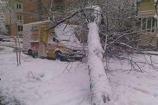 У Львові через негоду падали дерева - На Україну насувається активний  циклон  два дні йтиме c1346a1b9c52e