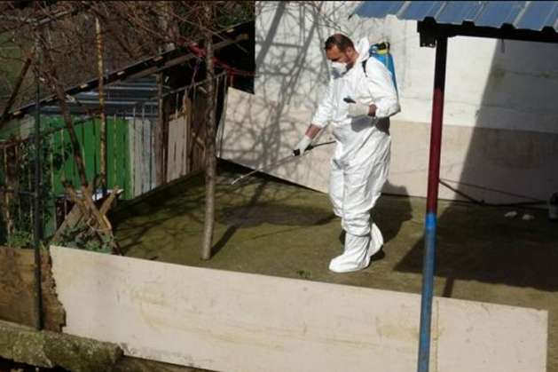 Через хвору корову понад 70 людей у Туреччині госпіталізували з підозрою на сибірку