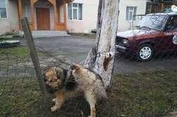 Фото: — Собака, що застряг