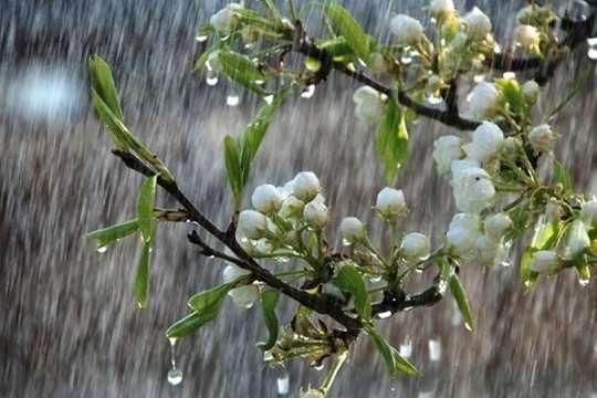 Дощі накриють Україну востанню п'ятницю квітня