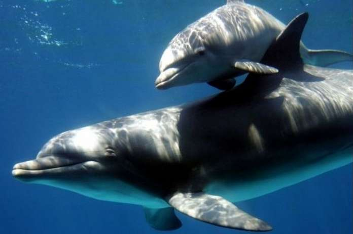 Відмовилися від їжі і спілкування!: Українські бойові дельфіни загинули в Криму після анексії