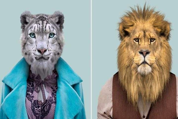 Экзотические стиляги  Фотограф снял диких животных в платьях и костюмах 198720904cabe
