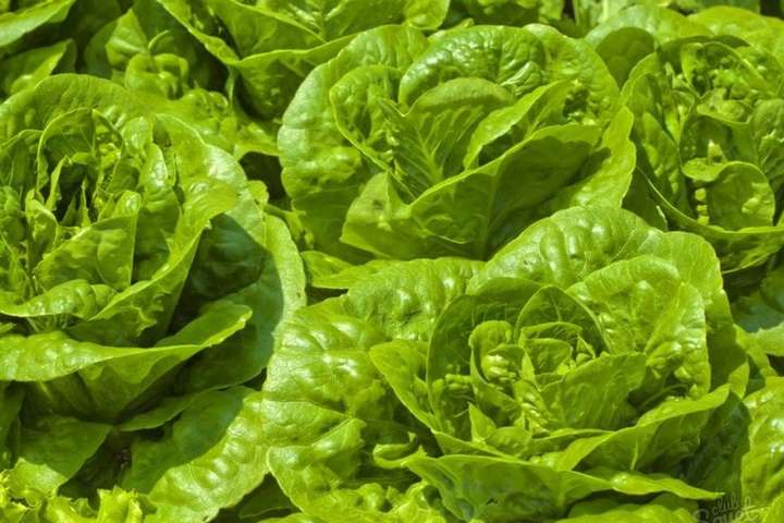 УСША салатом отруїлися близько 200 осіб, п'ятеро загинули