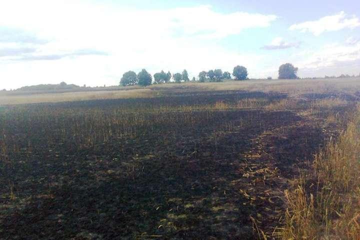 На Житомирщині пожежа знищила 21 гектар пшениці