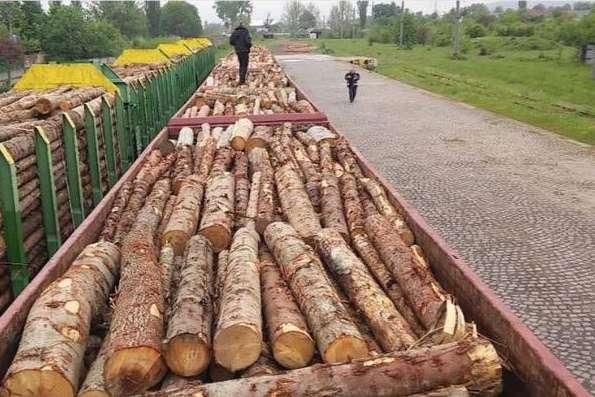 Кабмін влаштує аудит лісгоспам, аби припинити контрабанду лісу до ЄС
