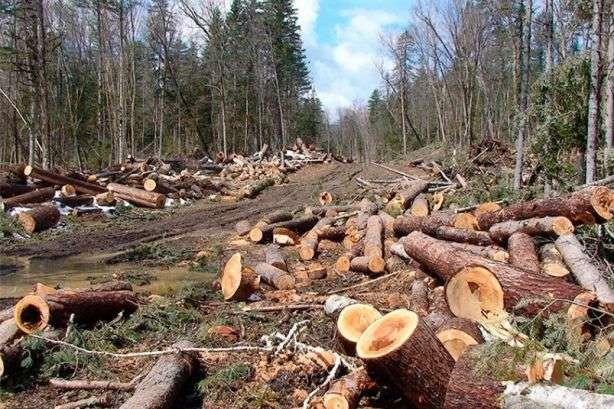 На Прикарпатті під час перевірки екологічна інспекція нарахувала 880722гривень збитків