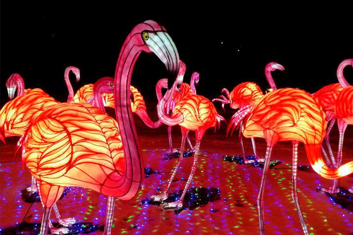 Під час монтажу інсталяцій використано близько 15 тисяч лампочок і більше 2 кілометрів шовку - Сади панд, гігантський дракон: на киян чекає дивовижний Фестиваль китайських ліхтарів (фото)