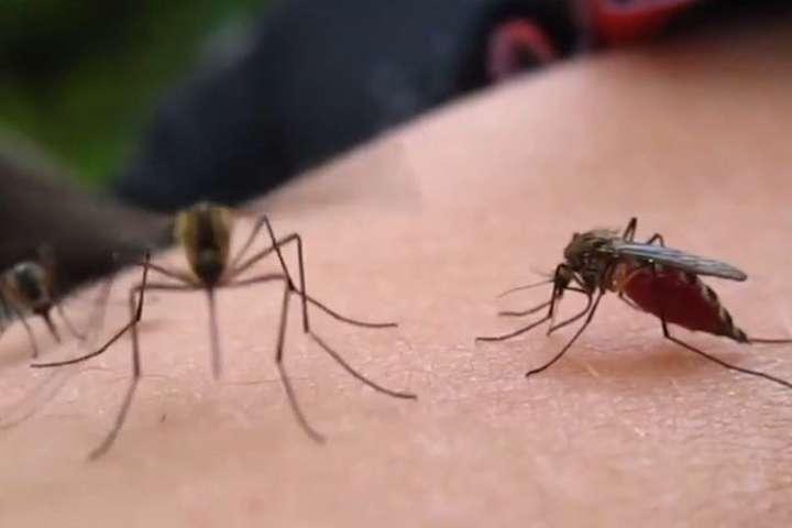 Лихоманка Чікунгунья передається людям інфікованими комарами - Двоє киян привезли з відпочинку рідкісну хворобу