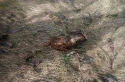 Фото: — <span>Мор стався біля полів, засіяних рапсом</span>