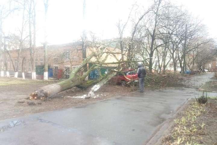Шквальний вітер повивертав дерева з корінням та пошкодив дахи - Черніговом пронісся буревій (ФОТО)