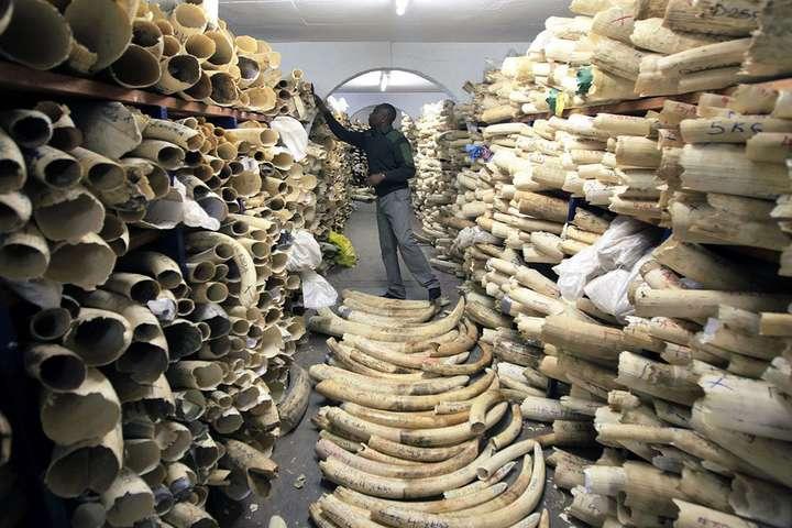 Пять стран Африки требуют разрешить торговлю слоновой костью