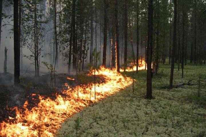 Поблизу Станиці Луганської горить замінований ліс: є поранений