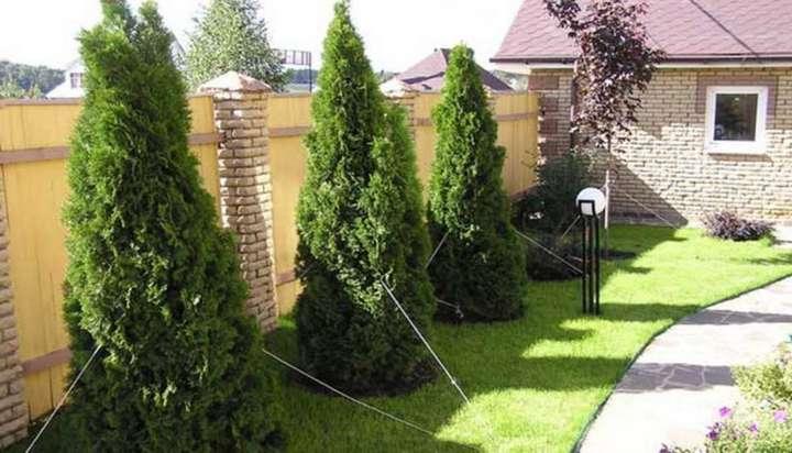 В Україні заборонили висаджувати дерева впритул до сусідньої ділянки