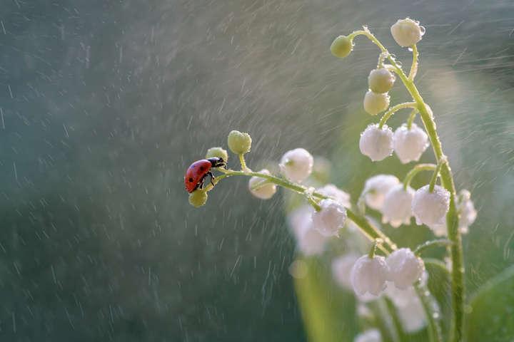 Прогноз погоди: сьогодні частину України накриють дощі