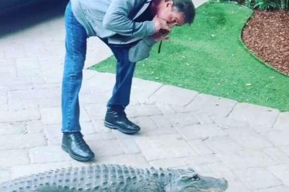 Сильвестр Сталлоне завел у себя дома дикобраза и аллигатора (видео)