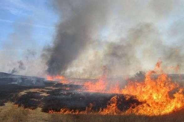 Наразі причина пожежі встановлюється - Під Києвом згоріло 10 га пшениці