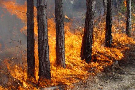 У ДСНС попередили про надзвичайну пожежну небезпеку