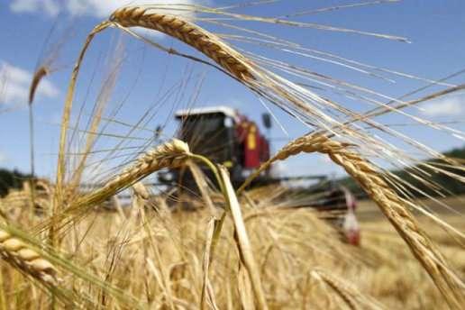 Жита з січня по серпень 2019 року за кордон було продано на$3,35 млн — Україна за пів року експортувала пшениці на $1,87 млрд