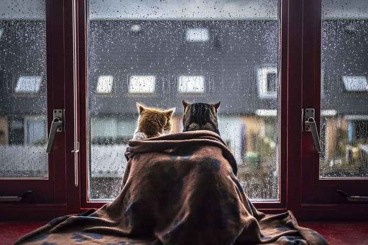 Похолодання, вітер і дощі: прогноз погоди в Україні на 18 вересня ...