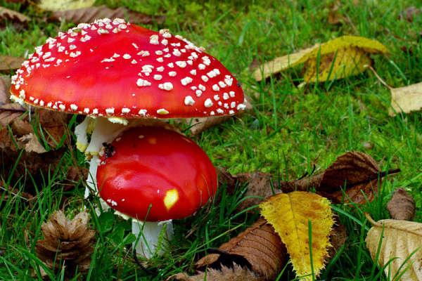 На Кіровоградщині від отруєння грибами померла 19-річна дівчина ...