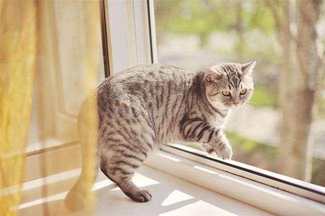 Гола жінка з котом випала з вікна у Дніпрі